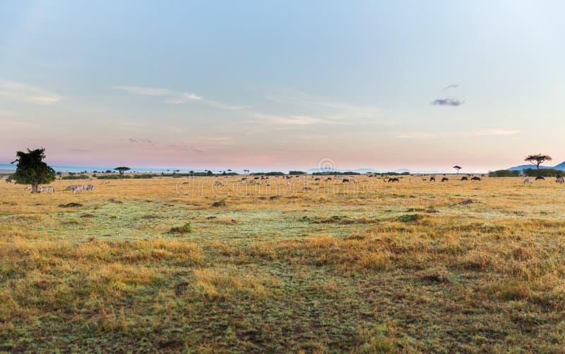 Groep herbivore dieren in savanne in Afrika stock fotografie