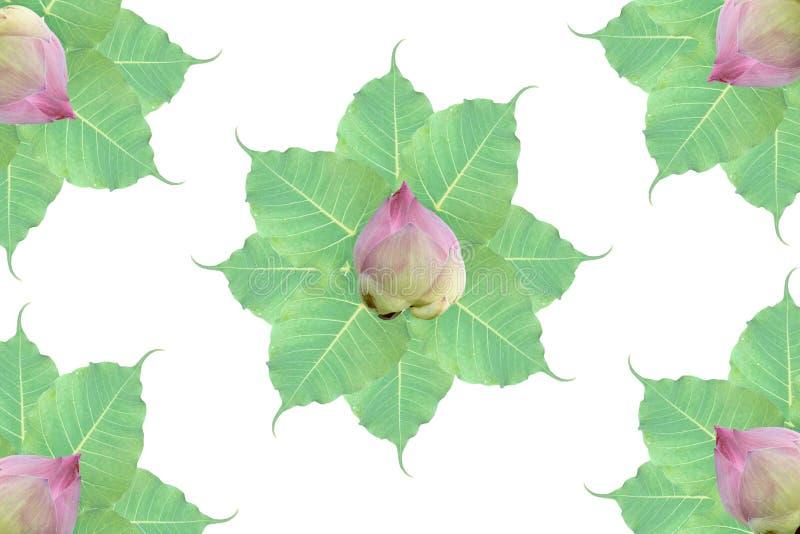 Groep het blad en de lotusbloem van BO op witte achtergrond stock fotografie