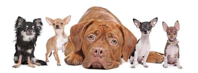 Groep honden stock fotografie