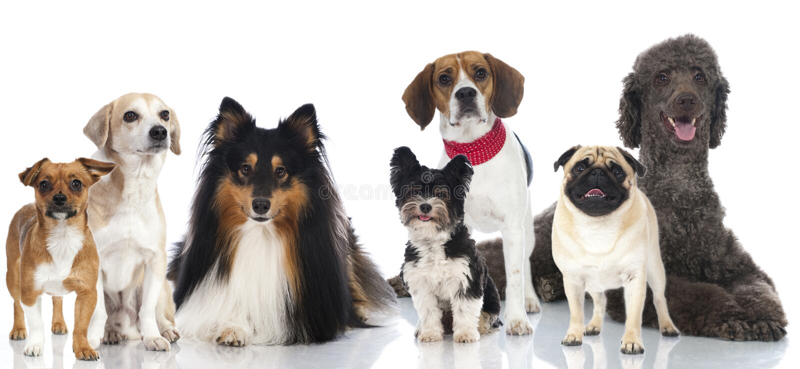Groep honden royalty-vrije stock afbeeldingen