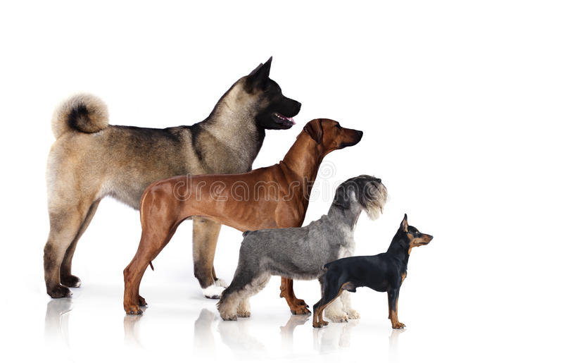 Groep honden royalty-vrije stock afbeelding