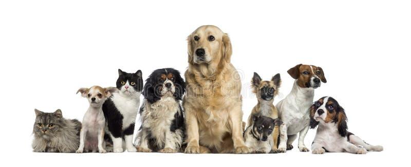 Groep Honden en een kat royalty-vrije stock afbeelding
