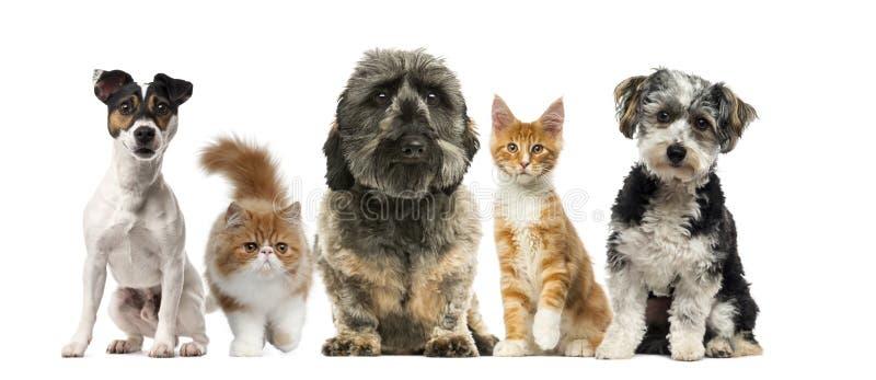 Groep honden en katten voor een witte achtergrond stock afbeeldingen