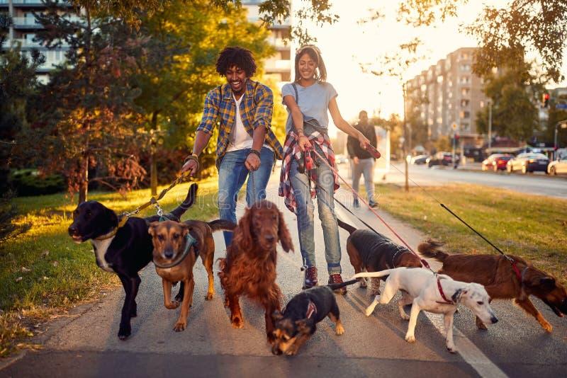 Groep honden in het park die met paar lopen royalty-vrije stock foto