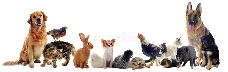 Groep huisdieren stock foto