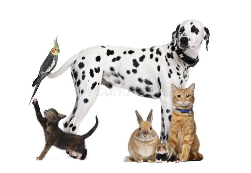 Groep huisdieren stock afbeelding