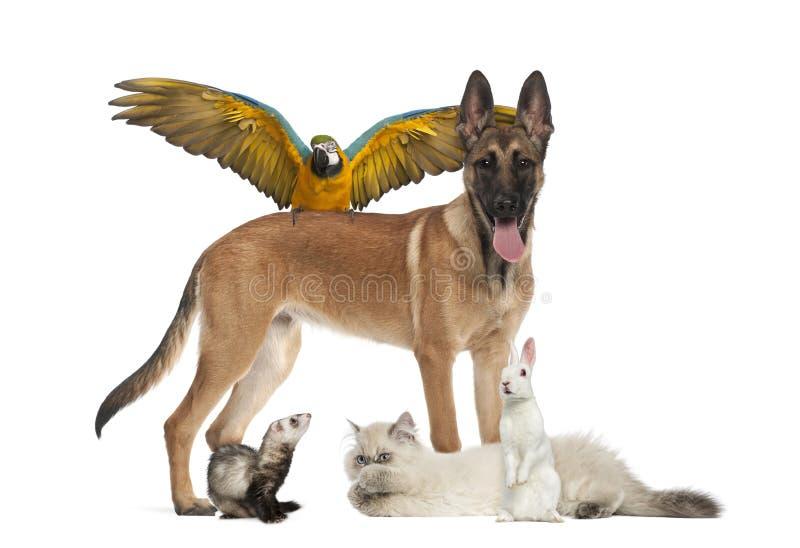 Groep huisdieren stock afbeeldingen
