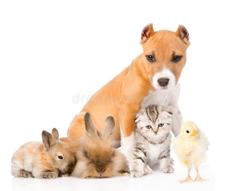Groep huisdieren Geïsoleerdj op witte achtergrond stock afbeeldingen
