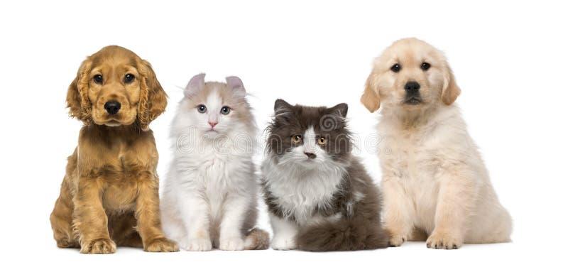 Groep huisdieren: katje en puppy op ruw royalty-vrije stock foto