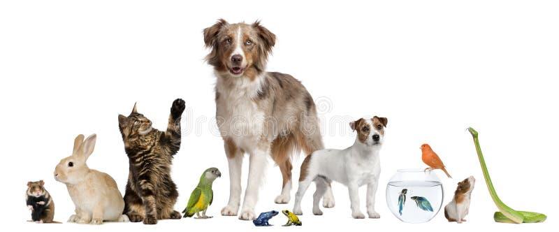Groep huisdieren samen royalty-vrije stock afbeelding