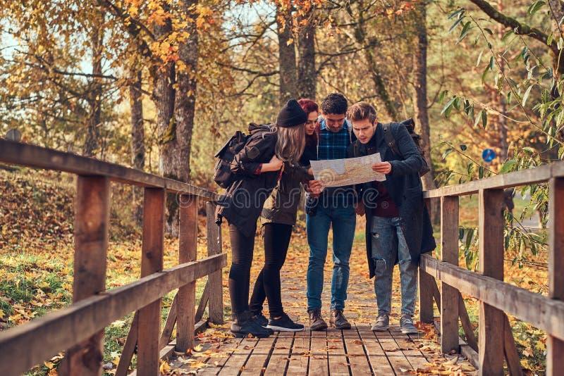 Groep jonge vrienden die in de herfst kleurrijk bos wandelen, bekijkend kaart en planningsstijging stock foto's