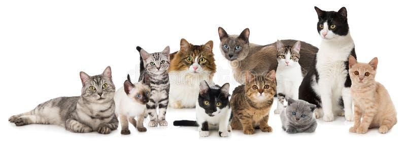 Groep katten royalty-vrije stock afbeelding