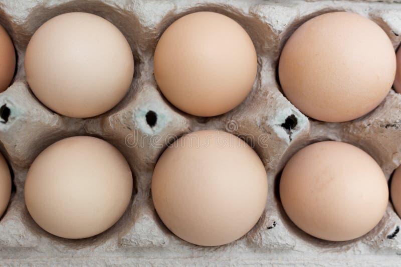 Groep kippeneieren in document het vakje van het eidienblad stock foto