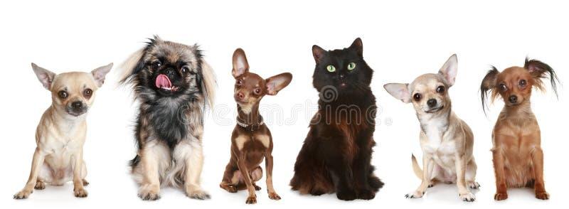Groep kleine honden en een kat stock afbeelding
