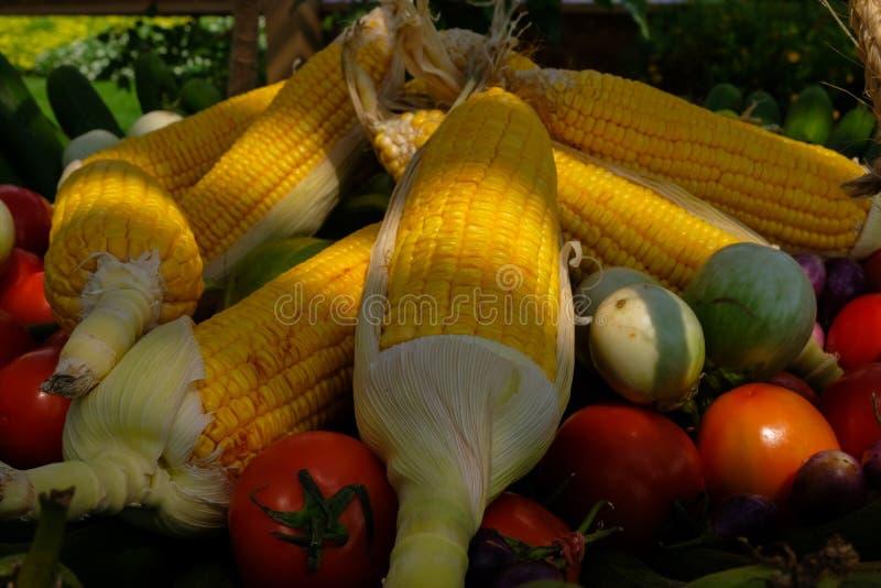 Groep Kleurrijke groenten op een mand Het eten kwaliteit met gezond stock foto