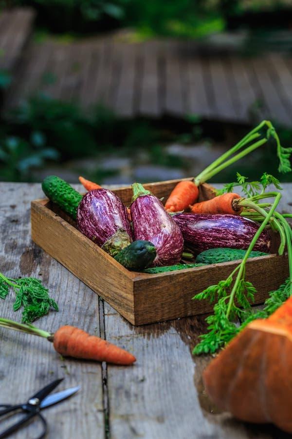 Groep Kleurrijke groenten op een mand Tuin houten lijst royalty-vrije stock foto