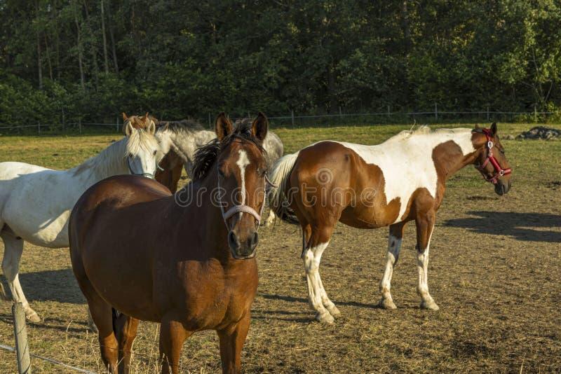 Groep kleurrijke paarden op rust op gebied Het concept van het babykinderdagverblijf royalty-vrije stock afbeeldingen
