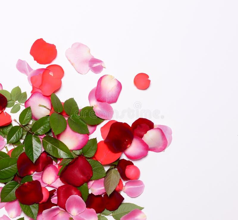 Groep kleurrijke roze bloemblaadjes en bladeren op witte achtergrond - Hoogste mening stock afbeeldingen