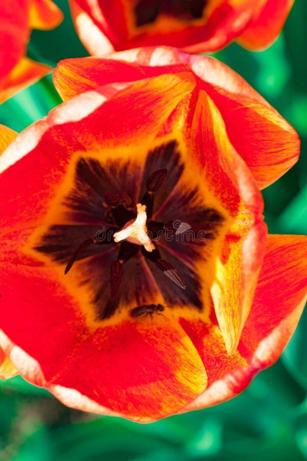 Groep kleurrijke tulp Kleurrijke achtergrond stock foto's