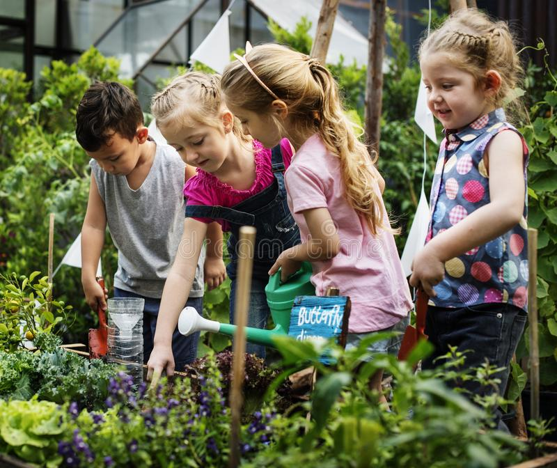 Groep kleuterschooljonge geitjes leren die in openlucht tuinieren royalty-vrije stock fotografie