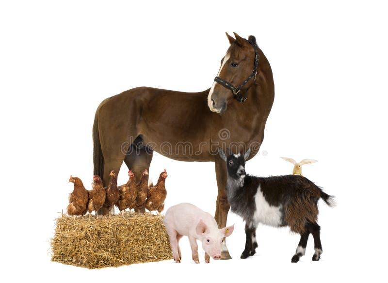Groep landbouwbedrijfdieren royalty-vrije stock afbeelding