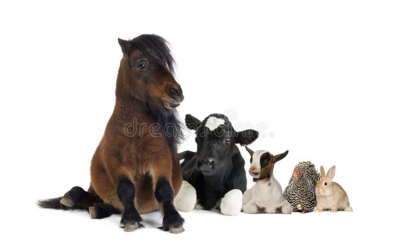 Groep landbouwbedrijfdieren stock foto's