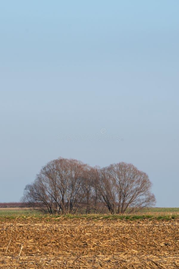 Groep leafless bomen op een gebied van geoogst graan, tegen een gedempte blauwe hemel, de Provincie van Lancaster, PA royalty-vrije stock afbeelding