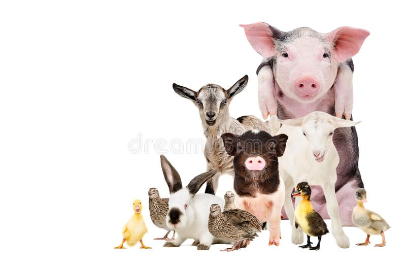 Groep leuke landbouwbedrijfdieren royalty-vrije stock foto's