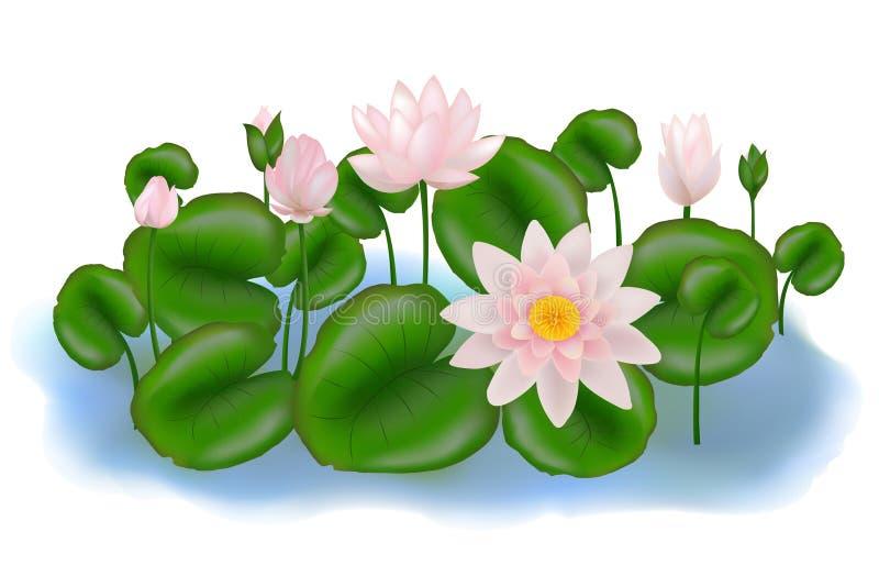 Groep Lotuses met bladeren. Vector royalty-vrije illustratie