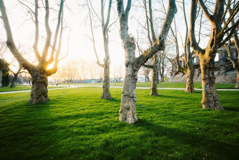 Groep oude bomen in een stadspark bij zonsondergang royalty-vrije stock foto's