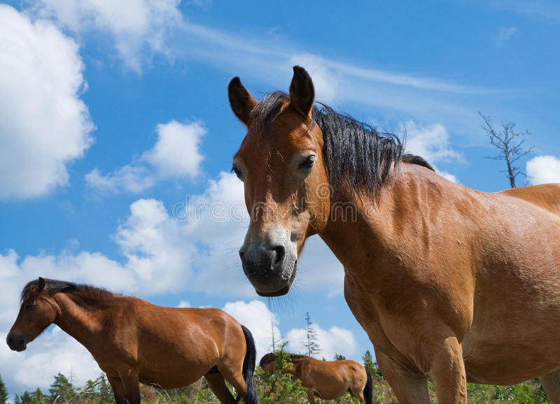 Groep paarden in Lojsta Hed, Zweden royalty-vrije stock foto