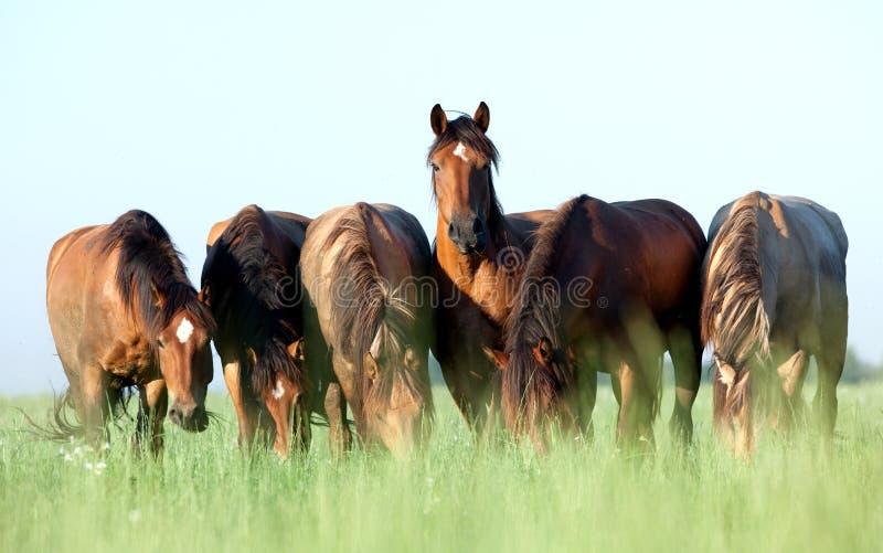 Groep paarden op gebied royalty-vrije stock foto