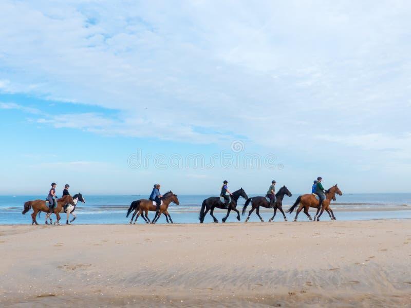 Groep paardruiters op het strand stock foto's