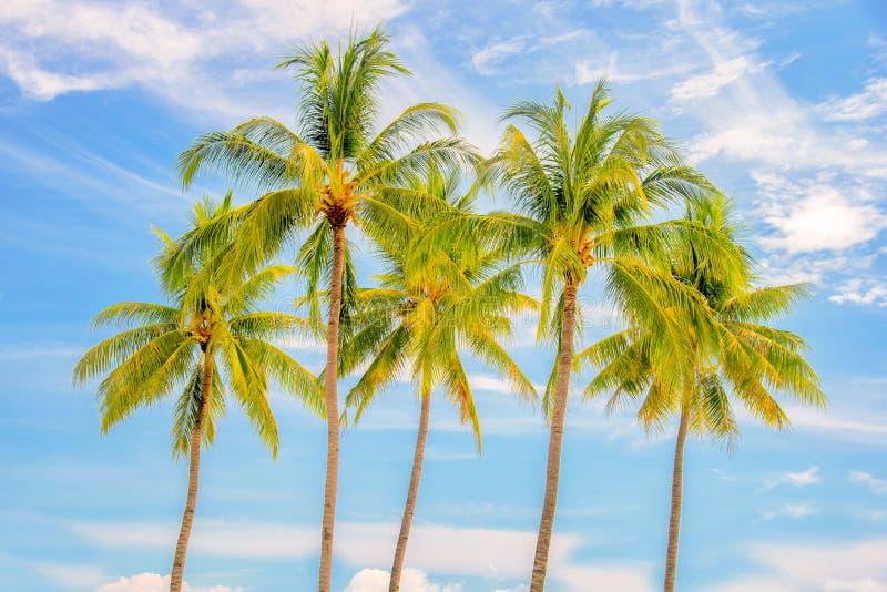 Groep palmen, blauwe hemelachtergrond, tropisch reisconcept stock fotografie