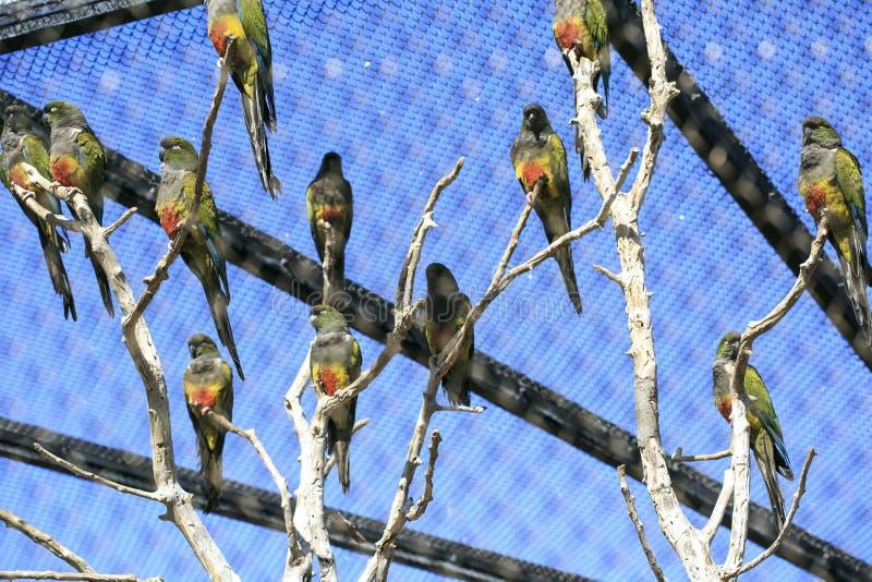 Groep papegaaien in een dierentuin royalty-vrije stock afbeelding