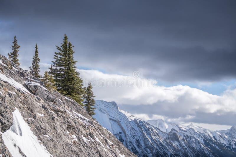 Groep pijnboombomen hoog op bergpiek met ruwe berg r stock afbeeldingen