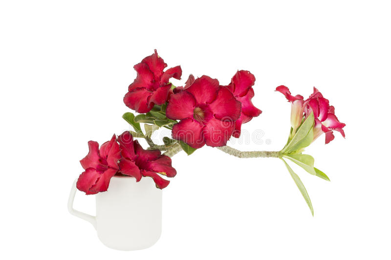 Groep rode azaleabloemen royalty-vrije stock foto