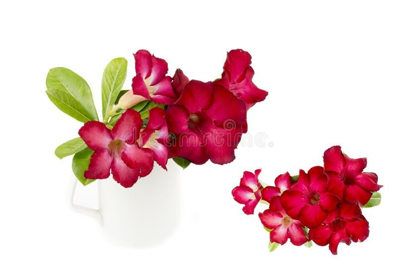 Groep rode azaleabloemen stock foto