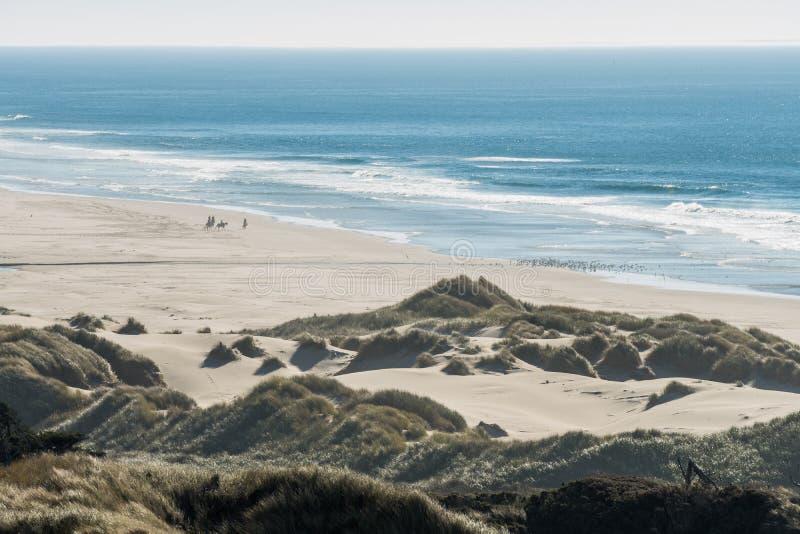Groep ruiters op hun paarden en een troep van vogels op een strand stock fotografie