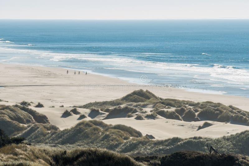 Groep ruiters op hun paarden en een troep van vogels op een strand stock foto