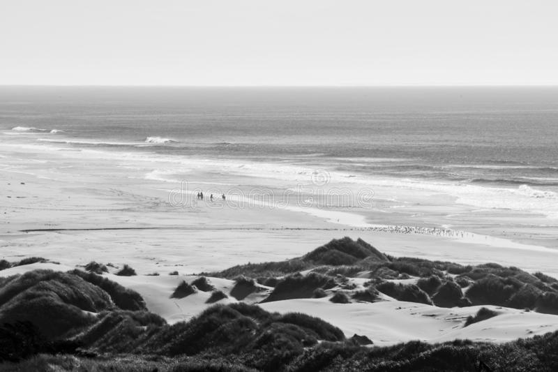 Groep ruiters op hun paarden en een troep van vogels op een strand royalty-vrije stock fotografie