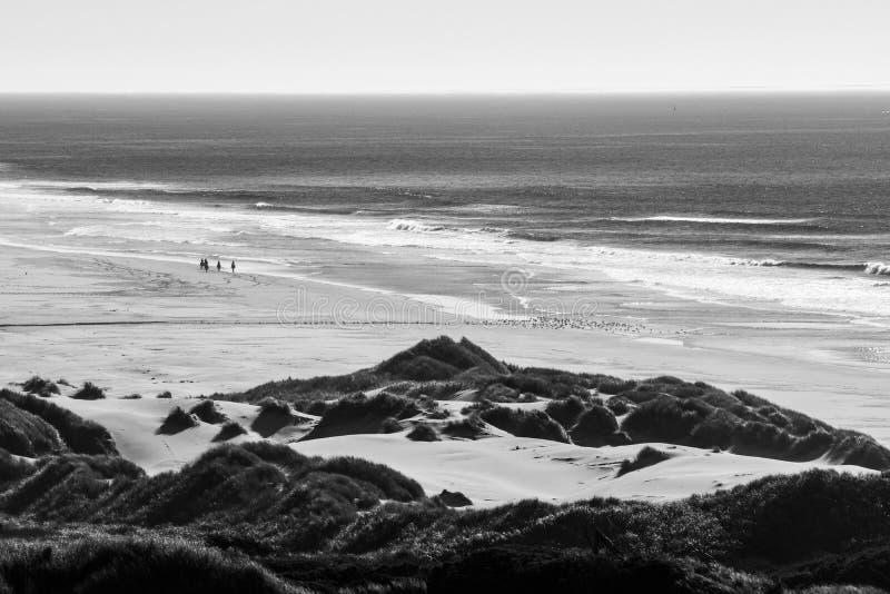 Groep ruiters op hun paarden en een troep van vogels op een strand stock afbeeldingen