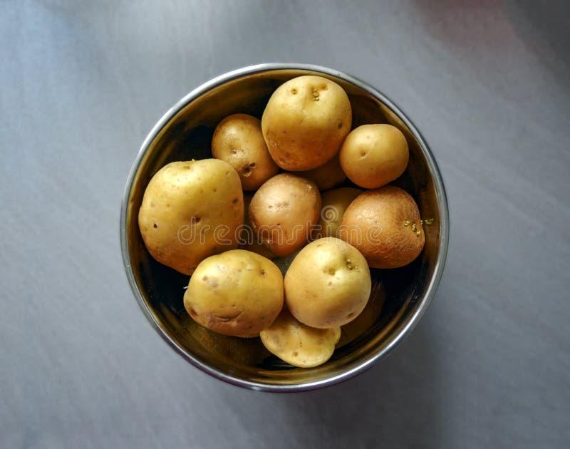 Groep ruwe aardappels die in een metaalkom moeten worden gepeld royalty-vrije stock afbeelding