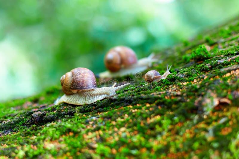 Groep slakken die omhoog op een boom beklimmen stock afbeelding