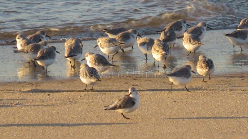 Groep strandlopers op het strand stock foto