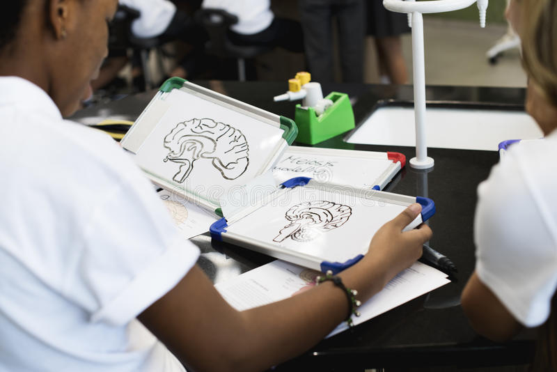 Groep studenten die biologieklaslokaal leren stock foto's