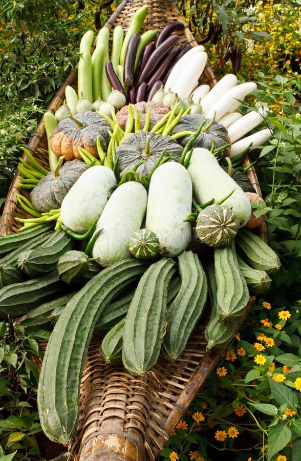 Groep tropische groenten stock foto's