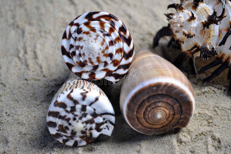 Groep van vier mooie overzeese shells stock afbeeldingen