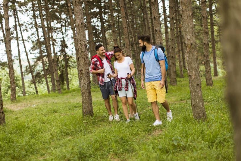 Groep van vier vrienden die samen door een bos wandelen royalty-vrije stock foto