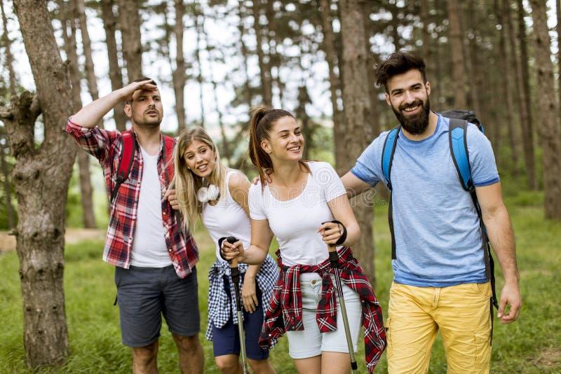 Groep van vier vrienden die samen door een bos wandelen stock fotografie